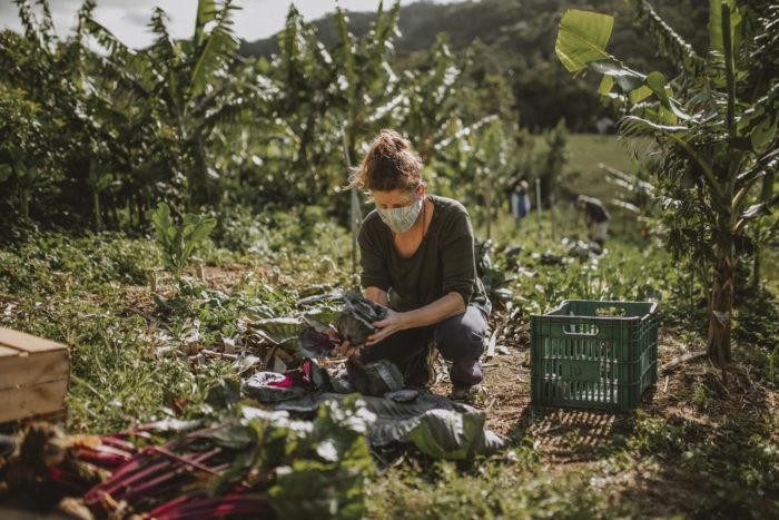Organico-Solidario-Producao