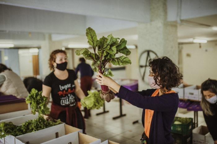 Organico-Solidario-Voluntarios